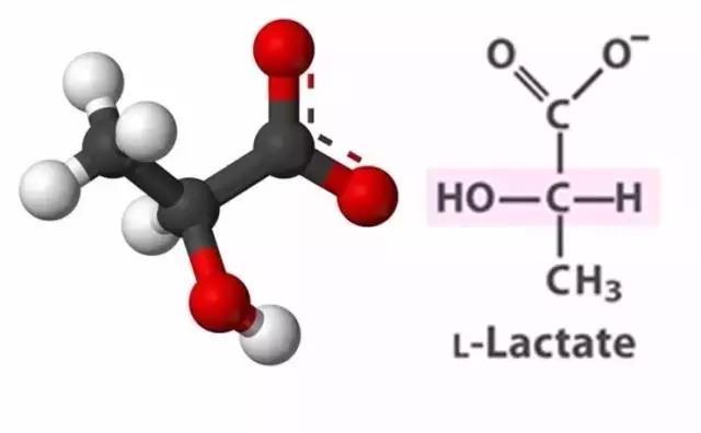 乳酸分子结构图